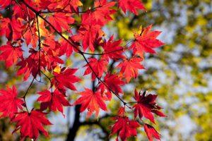 autumn-2789234_640 (1)
